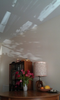 Shadows 9